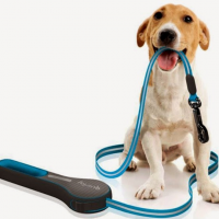 dog-with-leash